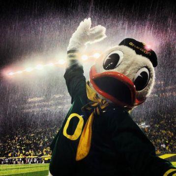 duck-rain-2